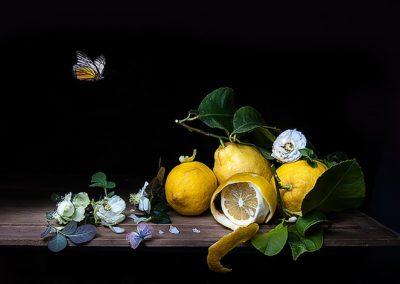 limoni_farfalle_vogue